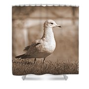 Seagulls 2 Shower Curtain