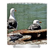 Seagulls Against Rust Shower Curtain