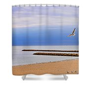 Seagulls And Sun Shower Curtain