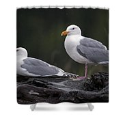 Seagulls Shower Curtain by Gary Langley