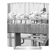 Seagulls In A Row Shower Curtain