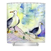 Seagulls In Calpe In Spain Shower Curtain