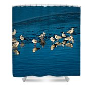 Seagulls On Frozen Lake Shower Curtain
