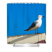 Seagulls On Roof Top Shower Curtain