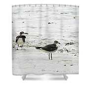 Seagulls On The Beach Shower Curtain