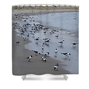 Seagulls On The Delaware Bay Shower Curtain by Bill Cannon