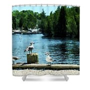Seagulls On The Pier Shower Curtain