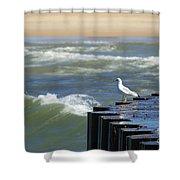 Seagull's Perch Shower Curtain
