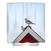 Seagulls Perched On The Rooftop Shower Curtain