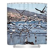 Seagulls Seagulls And More Seagulls Shower Curtain