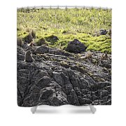 Seal - Montague Island - Austrlalia Shower Curtain