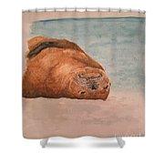 Seal 1 Shower Curtain