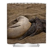 Seal And Pups Shower Curtain