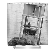 Seal Hammock Black And White Shower Curtain
