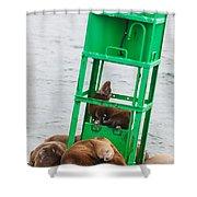 Seal Hammock Shower Curtain