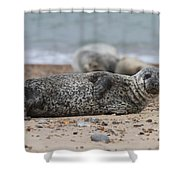 Seal Pup On Beach Shower Curtain