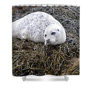 Seal Resting In Dunvegan Loch Shower Curtain