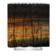 Seaoats Sunset Shower Curtain