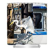 Searching For Free Fish Shower Curtain