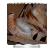Seashell Abstract 1 Shower Curtain