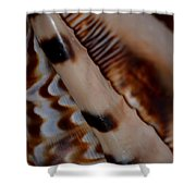 Seashell Abstract 2 Shower Curtain