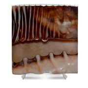 Seashell Abstract 3 Shower Curtain