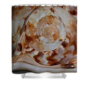 Seashell Abstract 5 Shower Curtain
