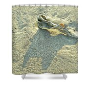 Seashell And Shadow On Sand Shower Curtain