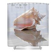 Seashell Be Still Shower Curtain