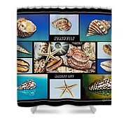Seashell Collection 2 Shower Curtain