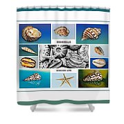 Seashell Collection 3 - Collage Shower Curtain