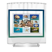 Seashell Collection 4 - Collage Shower Curtain
