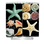 Seashell Collection Shower Curtain