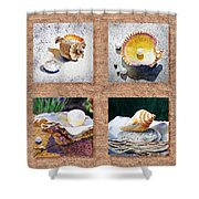 Seashell Collection I Shower Curtain
