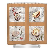 Seashell Collection II Shower Curtain