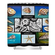 Seashell Collection Shower Curtain by Kaye Menner