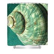 Seashell In Sunlight2 Shower Curtain