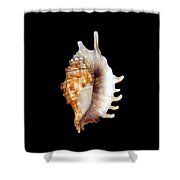 Seashell Lambis Digitata Shower Curtain
