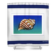 Seashell Wall Art 1 - Blue Frame Shower Curtain