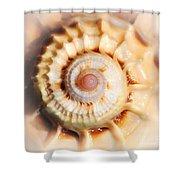 Seashell Wall Art 11 - Spiral Of Harpa Ventricosa Shower Curtain