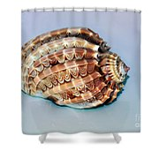 Seashell Wall Art 9 - Harpa Ventricosa Shower Curtain