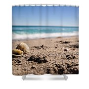 Seashells At The Shore Shower Curtain