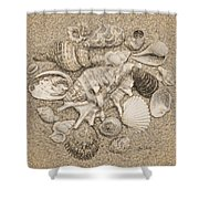 Seashells Collection Drawing Shower Curtain