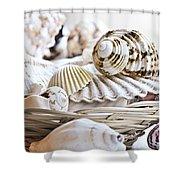 Seashells Shower Curtain by Elena Elisseeva