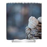 Seashells On Driftwood  Shower Curtain