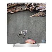 Seashells On The Seashore II Shower Curtain