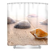 Seashells On Wood Dock Shower Curtain