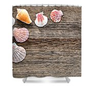 Seashells On Wood Shower Curtain