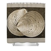 Seashells Spectacular No 11 Shower Curtain