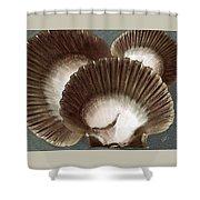 Seashells Spectacular No 22 Shower Curtain